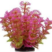 ATG Premium Plant Kelbpflanze pink 14 cm RP208