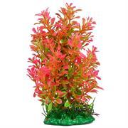 Aquariumpflanze dunkelroter Seefarn 18cm RP301