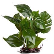 Grossblatt-Pflanze künstlich 20 cm grün RP311