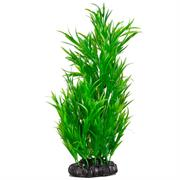 Grünliche Seegraspflanze Höhe 30 cm RP410