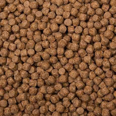 Koifutter-GOLD Komplettfutter für Teichfische von Teichpoint.de