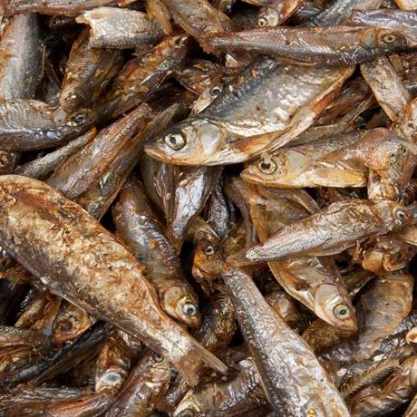 Trockenfische als Futtermittel Nahaufnahme