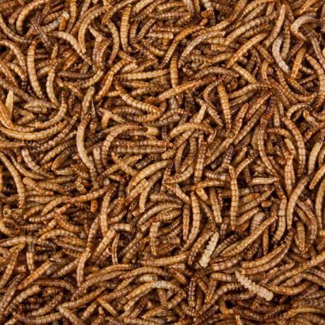 nahaufnahme von getrockneten Mehlwürmer