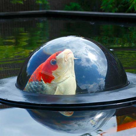AquaForte Fish Globe