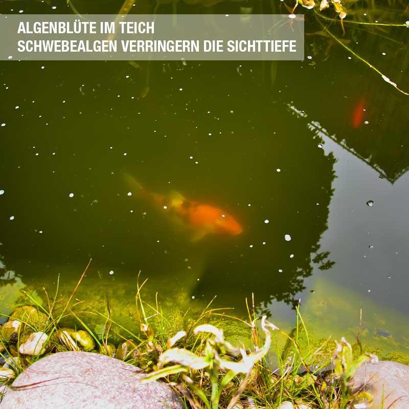 Gr nes wasser gegen schwebealgen 7 kg for Schwebealgen im teich